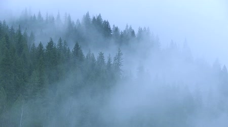 esőerdő : Time lapse of mist in the forest