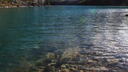 arbol : Moraine Lake en Parque Nacional Banff Archivo de Video
