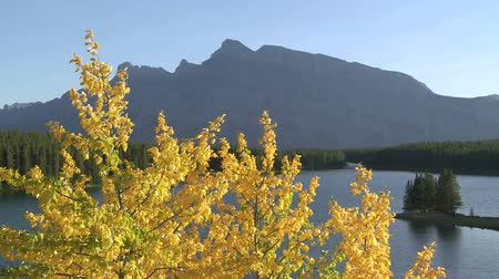 upadek : Mt.Rundle and autumn poplar trees in Banff National Park
