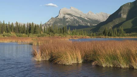 kamış : Vermilion Lakes in Banff National Park with Mount Rundle