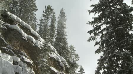 ladin : Snow in the forest Stok Video
