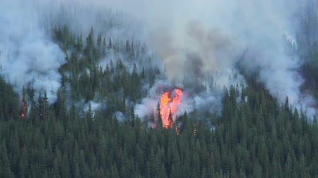 silvicultura : Forest Fire  Stock Footage