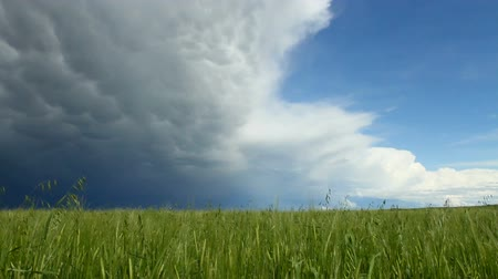 polního : Summer storm clouds over grain field