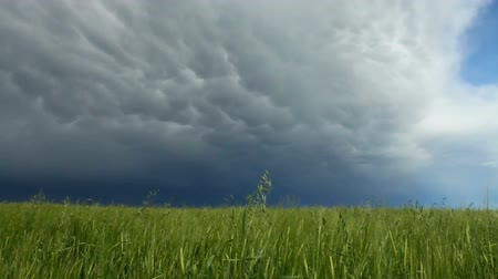 çiftlik : Summer storm clouds over grain field pan right