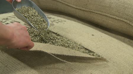 Opening a sack of green fair trade coffee beans, static