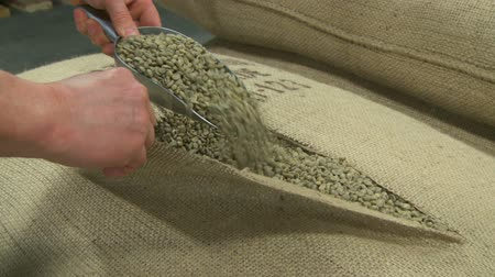 Opening a sack of green fair trade coffee beans, zoom in