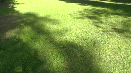 in : Green trees in park Stock Footage