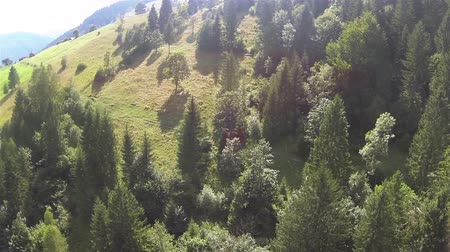 dağ evi : Beautiful fir-trees in mountains with sunlight. Aerial shot panorama