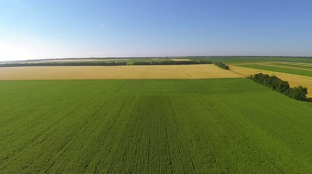 um : Green and yellow field from height. Aerial
