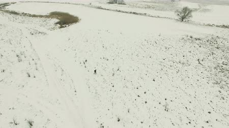 aeroespaço : 4K Aerial. Man goes across fields with snow. Top view