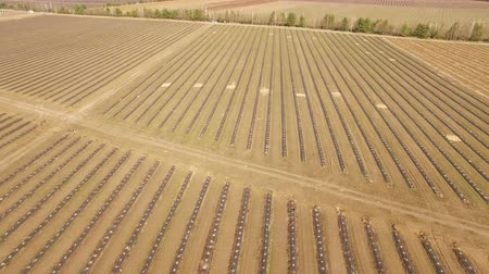 aeroespaço : 4K Aerial. Field in agriculture with equal beds in spring