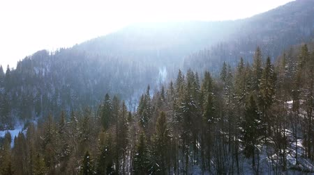 4k.Aerial.Winter time in mountain wood.Sunlight