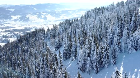4k.Aerial.Winter mountain hillwith pines in snow.Sunny day