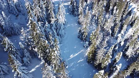 4K.Aerial.Winter mountains wood .Pines in snow. Top view Стоковые видеозаписи