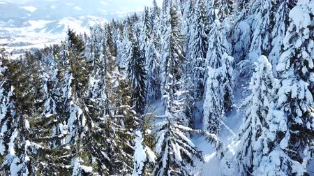 4k.Aerial. Beautiful mountain trees in snow. Rear fly. Стоковые видеозаписи