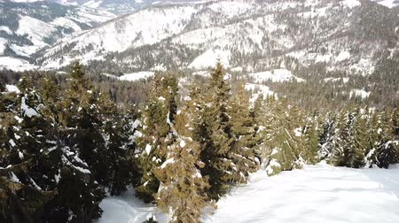 4k.Aerial. Beautiful mountain landscape with trees in snow. Panorama