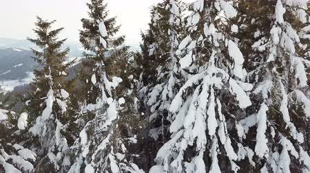 4k.Aerial. Beautiful mountain trees in snow. Lateral fly.