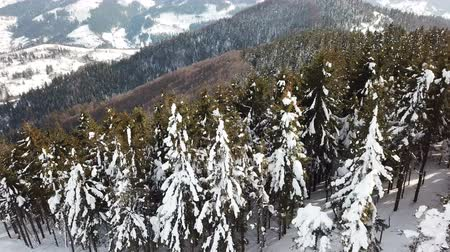 4k.Aerial. Mountain trees in snow. Winter fly