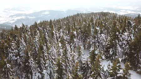 4k.Aerial. Over mountain trees, pines in snow. Winter fly Стоковые видеозаписи