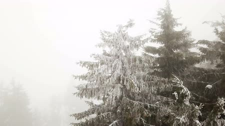 4k.Aerial. Over mountain pines in fog .Beautiful Mysterioustrees