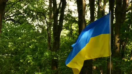 establishment : 4K. Ukrainian flag in wood waves on wind.