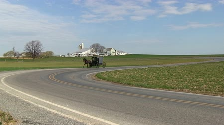 koń : An Amish horse and carriage in Lancaster County