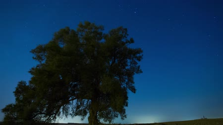 dub : Time lapse of starry sky and stars moving over Lonely tree.