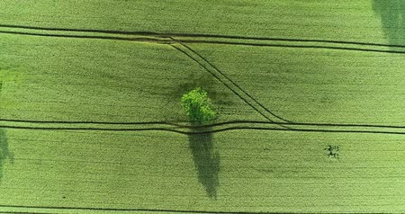 tırmık : a tree in a field in aerial view