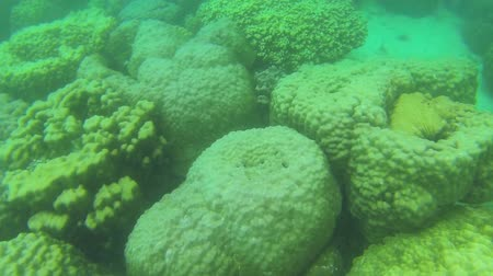 csibész : Underwater world with colorful corals and black sea urchins
