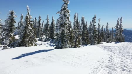 szron : Panoramic view on the beautiful winter landscape with pibne trees covered with snow.