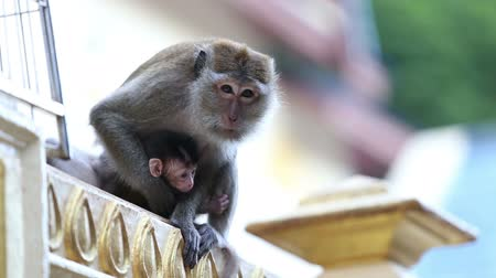 majom : monkey with a baby sitting on the fence and escapes