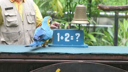 ara : parrot ring a bell as many times as he pointed perform on bird  show Stock Footage