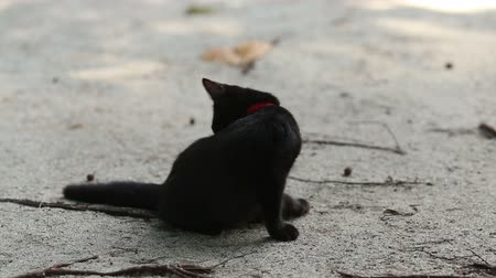 gato selvagem : black cat sits on sand beach licks itself and goes away