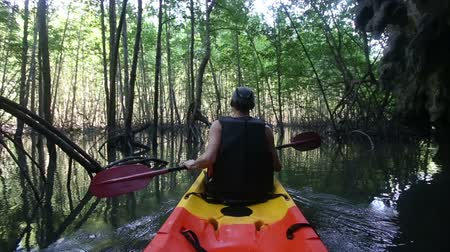 zadnice : old man in life-vest back-side view paddles on kayak out to light mangrove forest