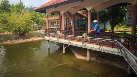 kül : YANG BEY, KHANH HOA  VIETNAM - SEPTEMBER October 2015: Crocodile farm servant entertains tourists feeding crocodiles with fishing rod from special pavilion in tropical park on September 10 in Yang bey