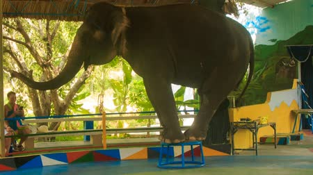 цирк : NHA TRANG, KHANH HOA  VIETNAM - SEPTEMBER 28, 2015: Big elephant stands on circus pedestal waves trunk welcomes spectators in outdoor circus performance in tropical park on September 28 in Nha trang