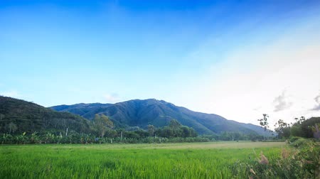 вьетнамский : Vietnamese rice field against green hills above blue sky