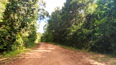 toprak : camera moves along shadow ground road in thick tropical forest against blue sky