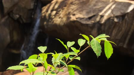small park : closeup branch of bush light green leaves against rock and small waterfall under sunlight