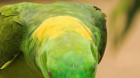 ara papagáj : closeup nice green and yellow parrot turns head to-and-fro at show in tropical park