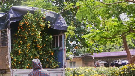 брезент : NHA TRANG, KHANH HOA  VIETNAM - JANUARY 26 2017: Big old gray truck covered with tarpaulin transports green tangerine trees with orange fruits bought for TET on January 26 in Nha Trang