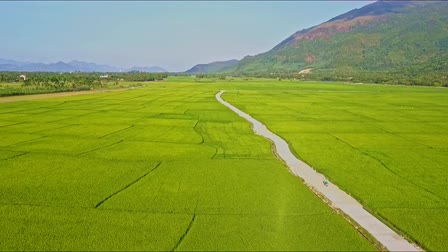 Вьетнам : Drone approaches ground road with scooter among green rice fields near small village