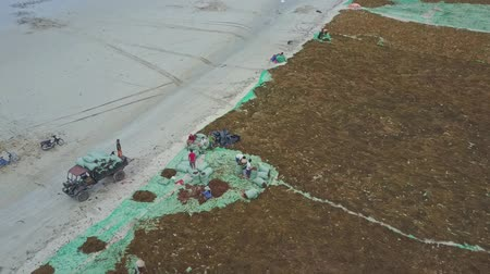 sand lia : NHA TRANG  VIETNAM - JUNE 24 2017: Flycam view local people in national hats at work with extracted algae on nets on sand beach on June 24 in Nha Trang
