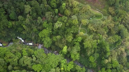 virgin forest : high aerial view highland with gorge in jungle