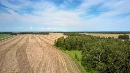 recentemente : aerial view harvested field by forest under blue sky
