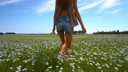 trigo sarraceno : backside girl walks on buckwheat field touches flowers Vídeos