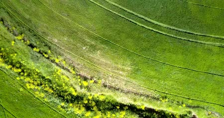 agricultores : upper view tractor traces on green field