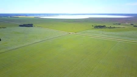trigo sarraceno : high aerial view green fields crossed by road and lake