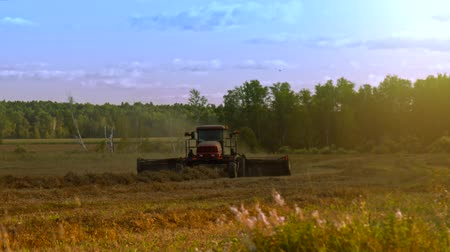 hay harvest : wheel-and-finger rakes for straw form swathes at sunset Stock Footage