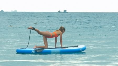 sup : young woman in pose Balancing Cat on paddle board on ocean